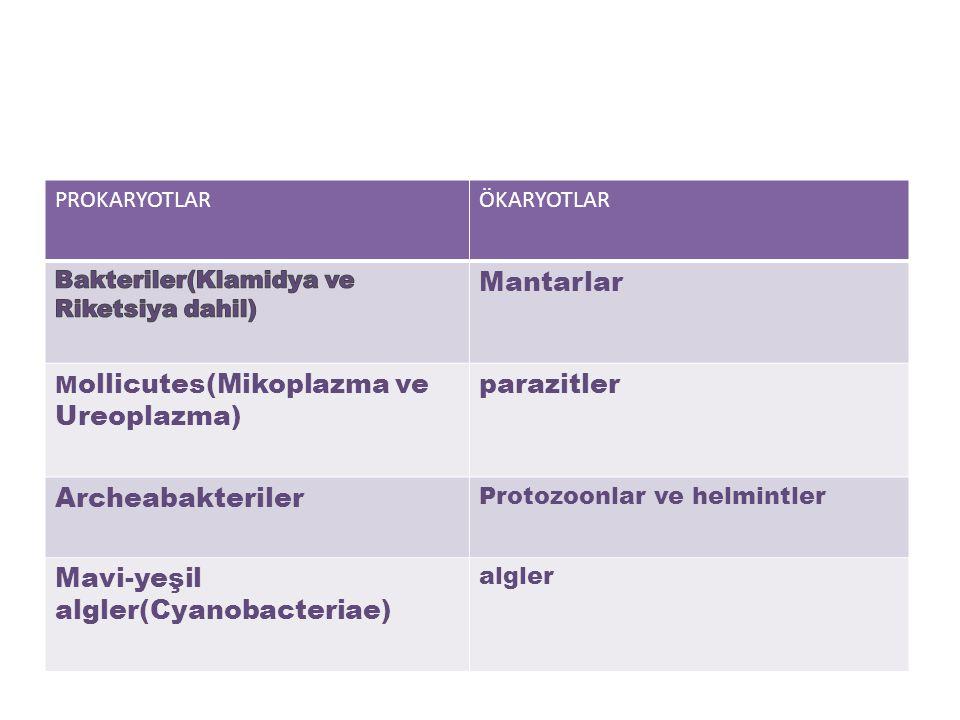PROKARYOTLARÖKARYOTLAR Mantarlar M ollicutes(Mikoplazma ve Ureoplazma) parazitler Archeabakteriler Protozoonlar ve helmintler Mavi-yeşil algler(Cyanobacteriae) algler