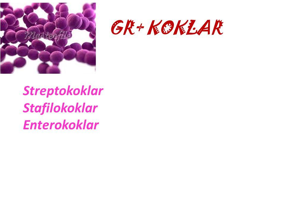 ÖZELLİKGR+GR- Hücre duvarıKalınİnce Dış zarYokVar Duvarsız formProtoplastSferoplast Periplazmik aralıkYokVar LipopolisakkaritYokVar Teikoik asitVarYok
