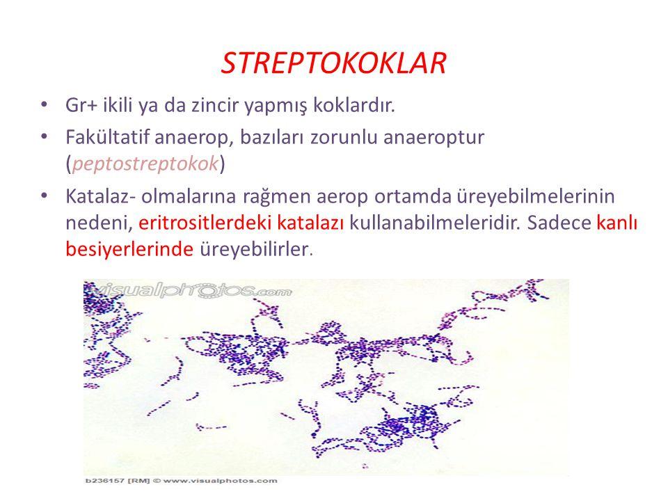 + katalaz - Enterococcus spp. Dirençli:non-grupA StaphylococcusStreptococcus sp./Enterococcus sp. hemoliz gama beta alfa Safra eskülin ve yüksek tuzda
