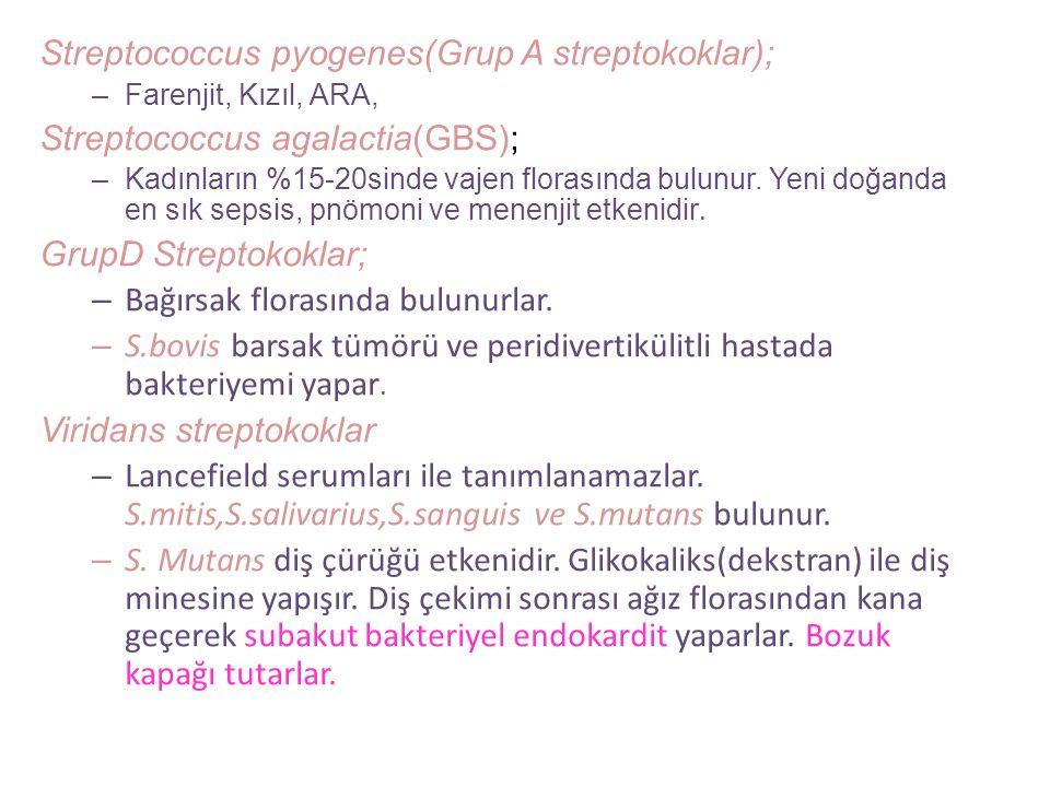 Streptokokların hücre duvarındaki C-maddesine göre gruplandırılması (LANCEFİELD A-U) A GRUBU → Streptococcus pyogenes B GRUBU → Streptococcus agalacti