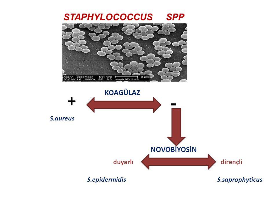 Nutrisyonel defektli Streptokoklar (Granulicatella(Abiotrophia)türleri) Üreme ortamlarında sistein veya pridoksal fosfat B6 vitaminlerine gereksinim d