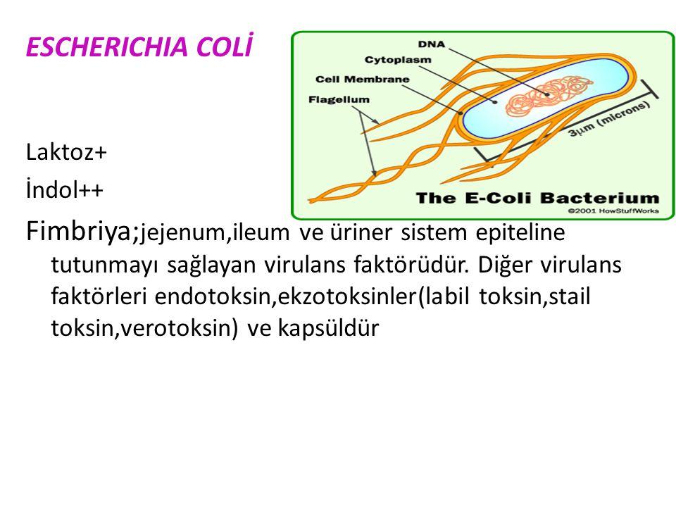Shigella, Klebsiella dışında tümü hareketlidir. Salmonella ve Shigella laktoz- Proteus ve Salmonella H2S+ Klebsiella ve Proteus üreaz + olması önemlid