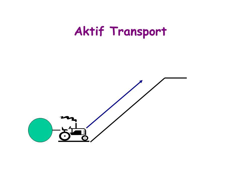 Aktif Transport