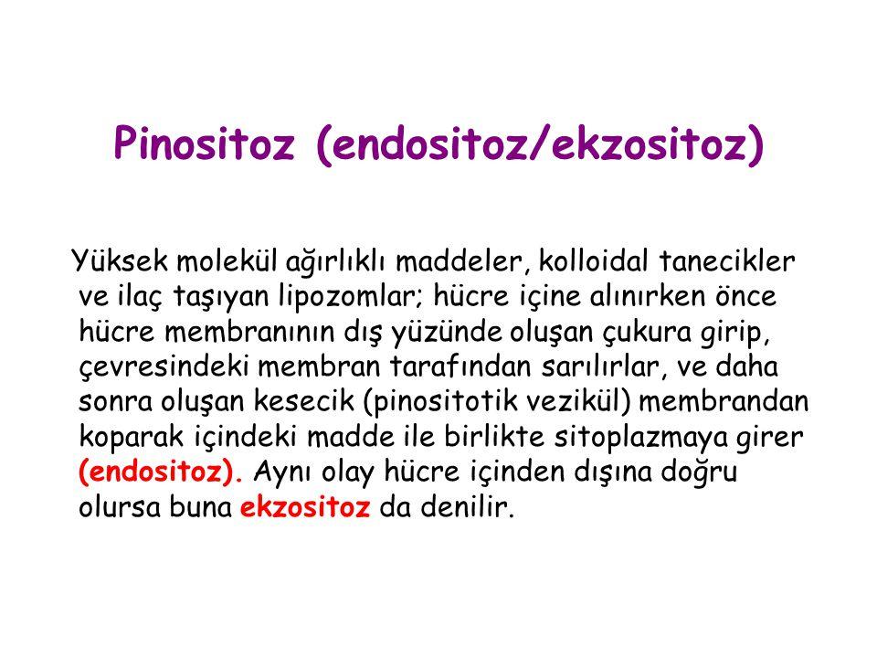 Pinositoz (endositoz/ekzositoz) Yüksek molekül ağırlıklı maddeler, kolloidal tanecikler ve ilaç taşıyan lipozomlar; hücre içine alınırken önce hücre m