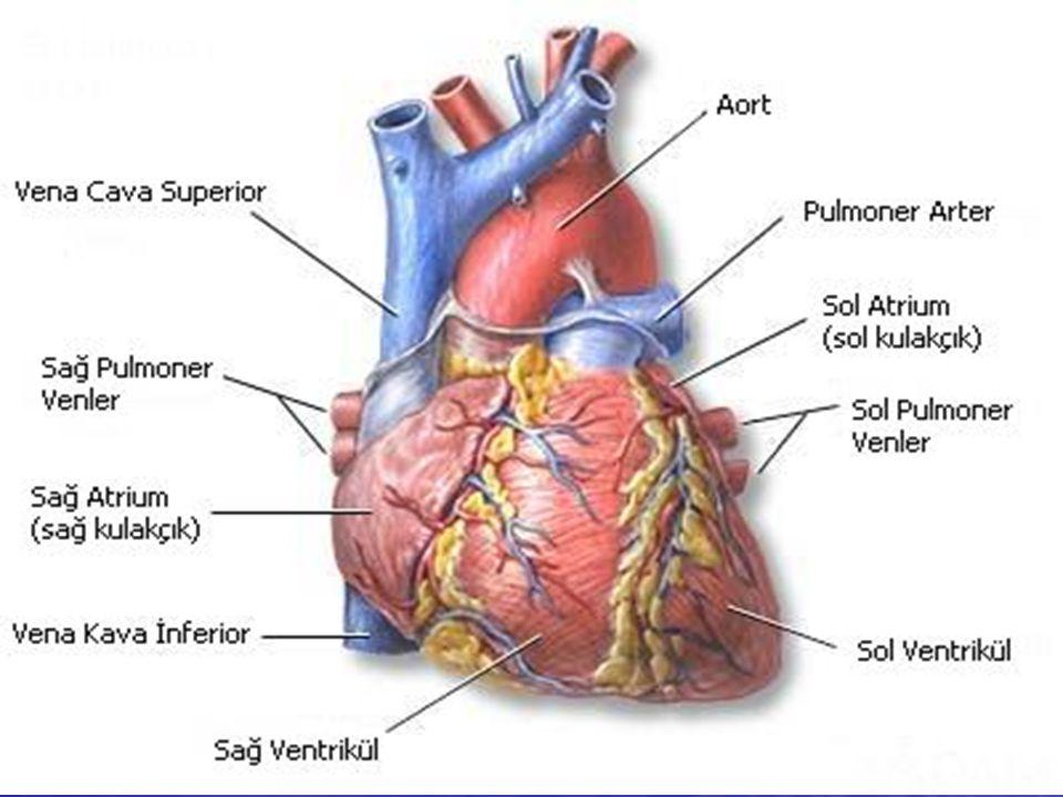 AKUT MIYOKARD ENFARKTÜSÜ (KALP KRİZİ) Kalp Krizininin olası nedenleri şunlardır: Vücudun herhangi bir yerinde oluşan bir pıhtının koroner damarlara ulaşıp aniden tıkaması Vücudun herhangi bir yerinde oluşan bir pıhtının koroner damarlara ulaşıp aniden tıkaması Kalp kapakları hasarlanmış kimselerde kapalçıktan kopan parçaların koroner arterleri tıkaması Kalp kapakları hasarlanmış kimselerde kapalçıktan kopan parçaların koroner arterleri tıkaması Vaskülitler, kronik hastalıklar Vaskülitler, kronik hastalıklar Kokain kullanımı gibi nedenler olabilir.