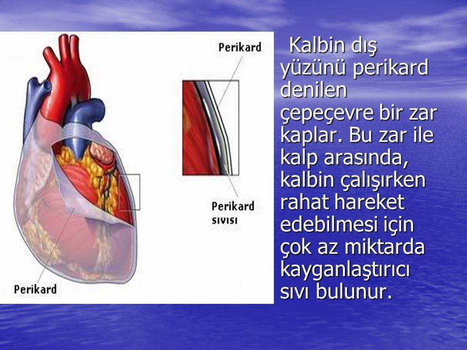 Kalbin dış yüzünü perikard denilen çepeçevre bir zar kaplar. Bu zar ile kalp arasında, kalbin çalışırken rahat hareket edebilmesi için çok az miktarda