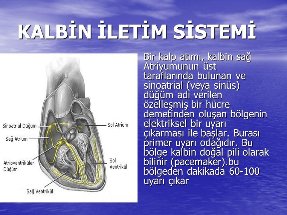 KALBİN İLETİM SİSTEMİ Sinüs düğümünden çıkan bu uyarı kalbin her iki atrium boyunca ve aşağıya doğru yayılır ve atriumlar kasılarak içlerindeki kanı ventriküllere gönderirler.