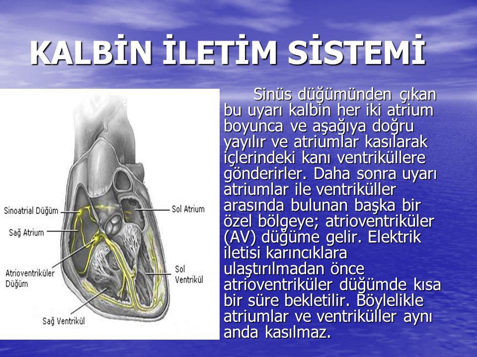 KALBİN İLETİM SİSTEMİ Sinüs düğümünden çıkan bu uyarı kalbin her iki atrium boyunca ve aşağıya doğru yayılır ve atriumlar kasılarak içlerindeki kanı v
