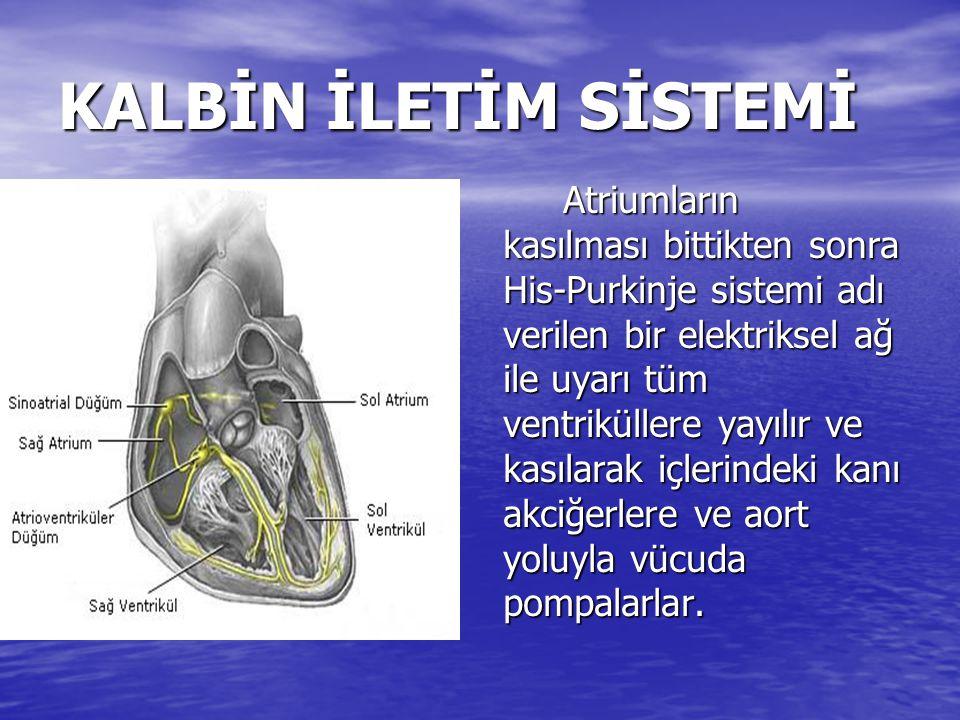 KALBİN İLETİM SİSTEMİ Atriumların kasılması bittikten sonra His-Purkinje sistemi adı verilen bir elektriksel ağ ile uyarı tüm ventriküllere yayılır ve