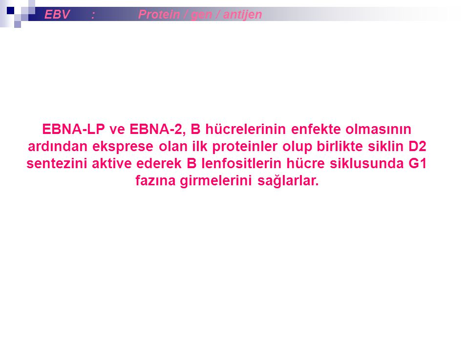 EBNA-LP ve EBNA-2, B hücrelerinin enfekte olmasının ardından eksprese olan ilk proteinler olup birlikte siklin D2 sentezini aktive ederek B lenfositle