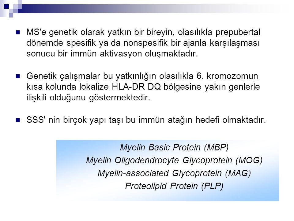 MS'e genetik olarak yatkın bir bireyin, olasılıkla prepubertal dönemde spesifik ya da nonspesifik bir ajanla karşılaşması sonucu bir immün aktivasyon