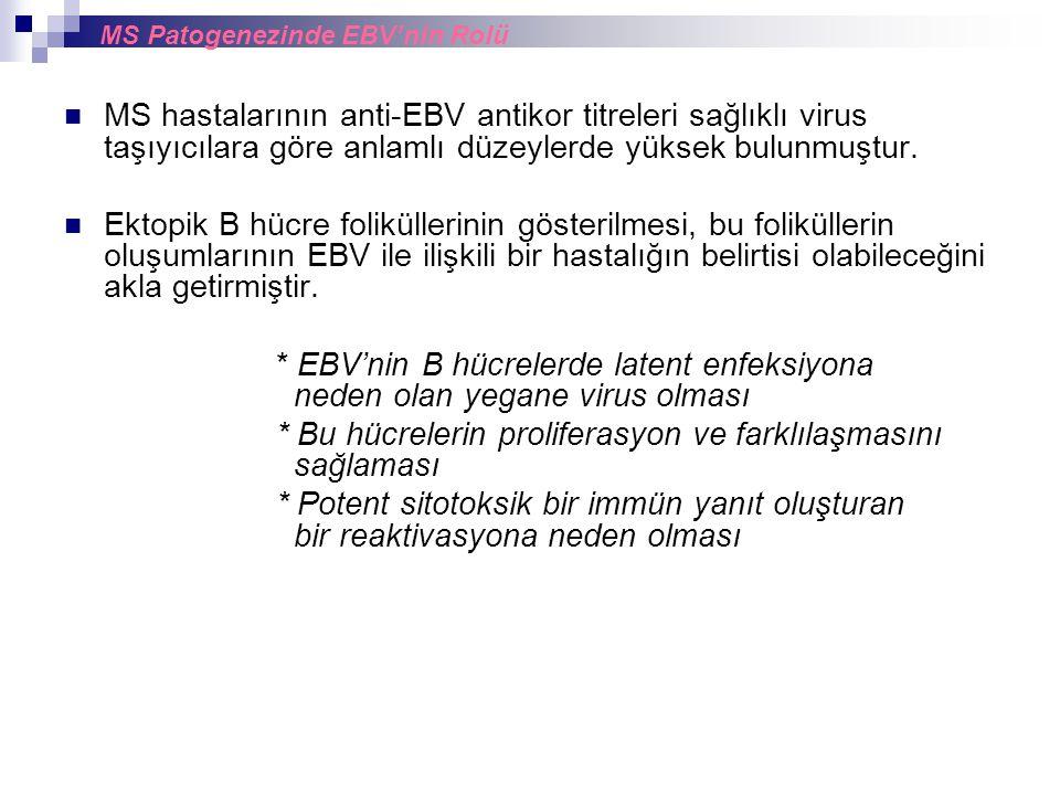 MS hastalarının anti-EBV antikor titreleri sağlıklı virus taşıyıcılara göre anlamlı düzeylerde yüksek bulunmuştur. Ektopik B hücre foliküllerinin göst