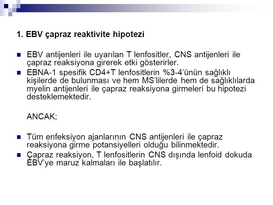 1. EBV çapraz reaktivite hipotezi EBV antijenleri ile uyarılan T lenfositler, CNS antijenleri ile çapraz reaksiyona girerek etki gösterirler. EBNA-1 s