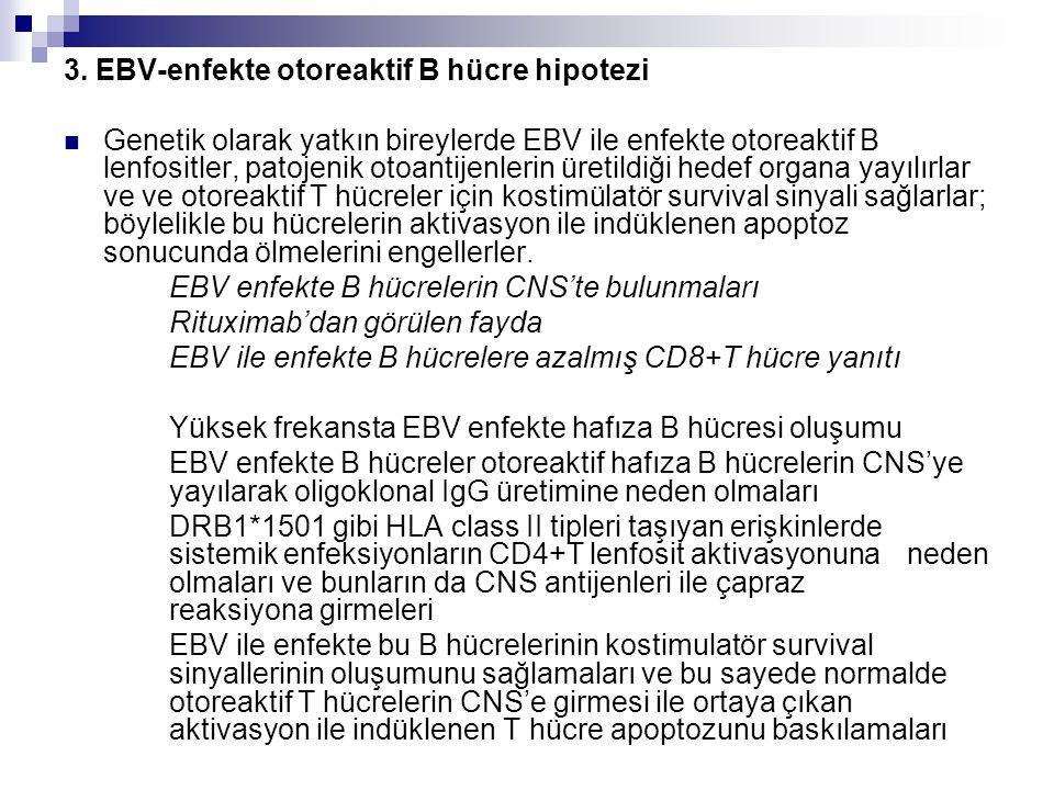3. EBV-enfekte otoreaktif B hücre hipotezi Genetik olarak yatkın bireylerde EBV ile enfekte otoreaktif B lenfositler, patojenik otoantijenlerin üretil