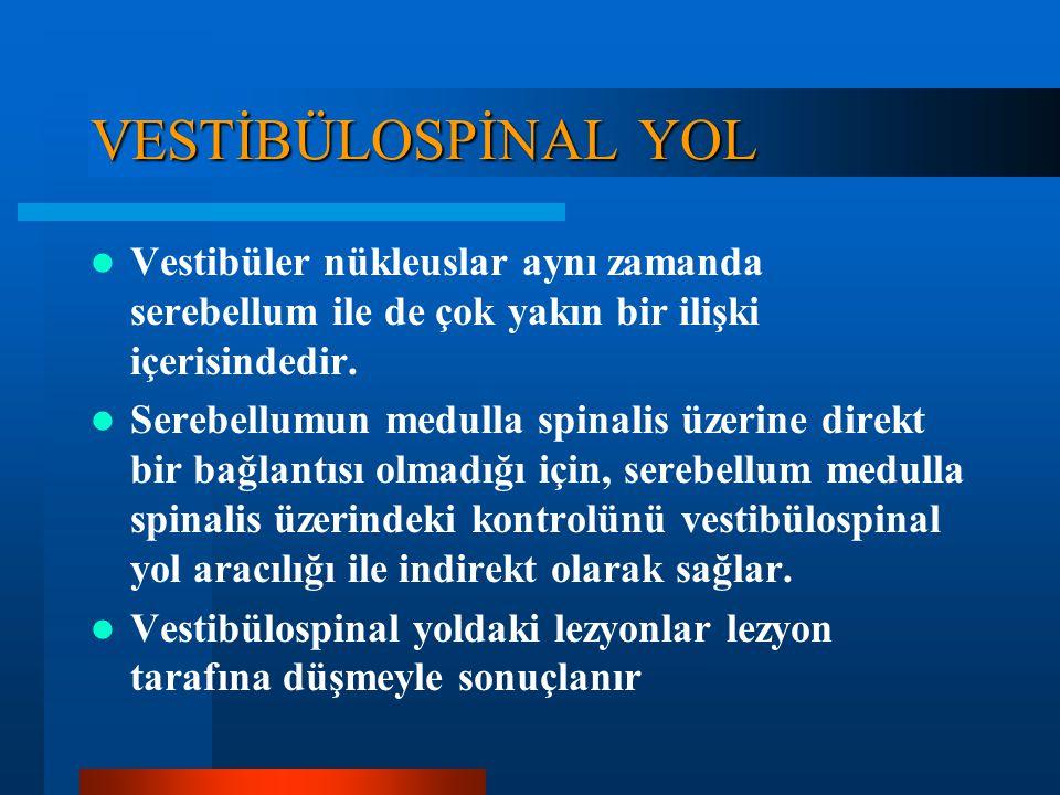 VESTİBÜLOSPİNAL YOL Beyinsapında 4 tane vestibüler nükleus vardır (süperior, lateral, medial, ve inferior). Vestibülospinal yol ÇAPRAZLAŞMAZ ve intern