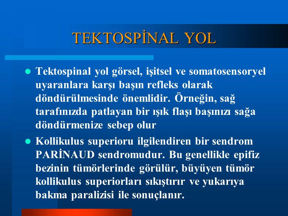 TEKTOSPİNAL YOL Bu yol kollikulus superiorların orta ve derin tabakalarındaki hücrelerden kaynaklanır, ortabeyin seviyesinde ÇAPRAZLAŞIR ve ortabeyin,