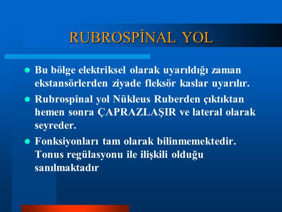 RUBROSPİNAL YOL Bu yol ortabeyindeki Nükleus Ruber (Kırmızı nükleus) denilen bölgeden başlar. Nükleus Rubere input girişi beynin motor bölgelerinden v