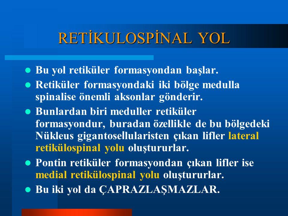 Traktus Rubrospinalis: Tonus regülasyonu