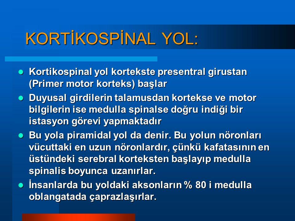 Efferent Yollar :
