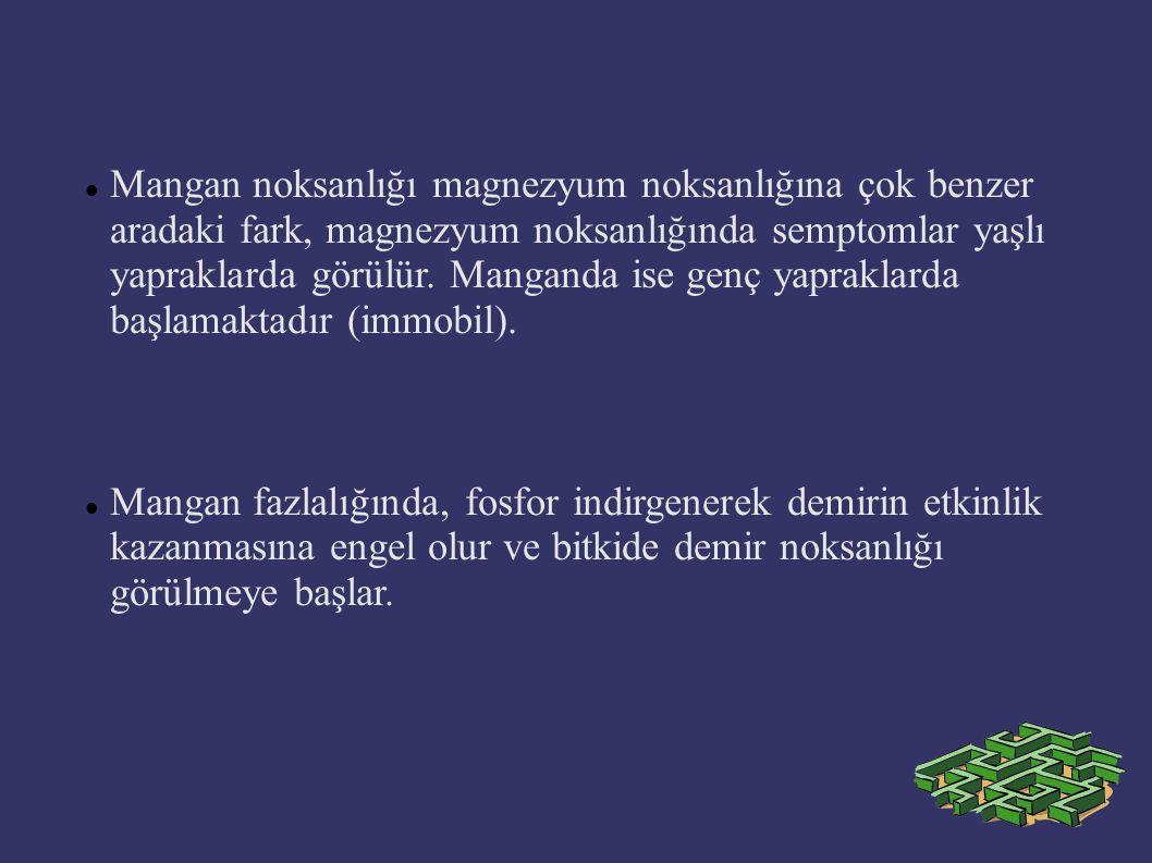 Mangan noksanlığı magnezyum noksanlığına çok benzer aradaki fark, magnezyum noksanlığında semptomlar yaşlı yapraklarda görülür. Manganda ise genç yapr