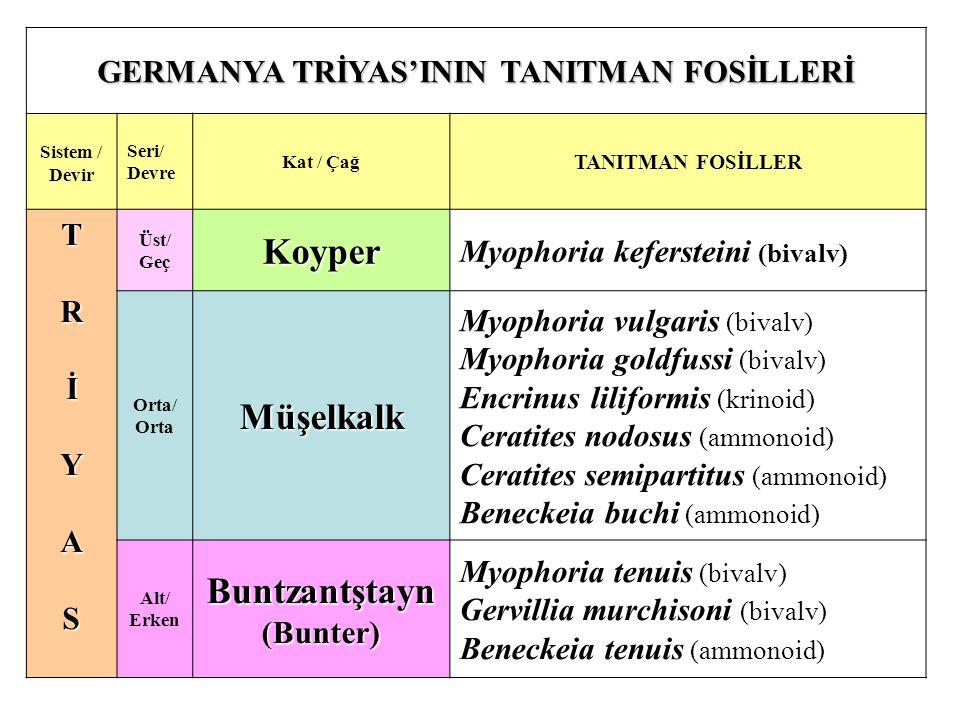 GERMANYA TRİYAS'ININ TANITMAN FOSİLLERİ Sistem / Devir Seri/ Devre Kat / Çağ TANITMAN FOSİLLER TRİYAS Üst/ GeçKoyper Myophoria kefersteini (bivalv) Orta/ OrtaMüşelkalk Myophoria vulgaris (bivalv) Myophoria goldfussi (bivalv) Encrinus liliformis (krinoid) Ceratites nodosus (ammonoid) Ceratites semipartitus (ammonoid) Beneckeia buchi (ammonoid) Alt/ ErkenBuntzantştayn(Bunter) Myophoria tenuis (bivalv) Gervillia murchisoni (bivalv) Beneckeia tenuis (ammonoid)