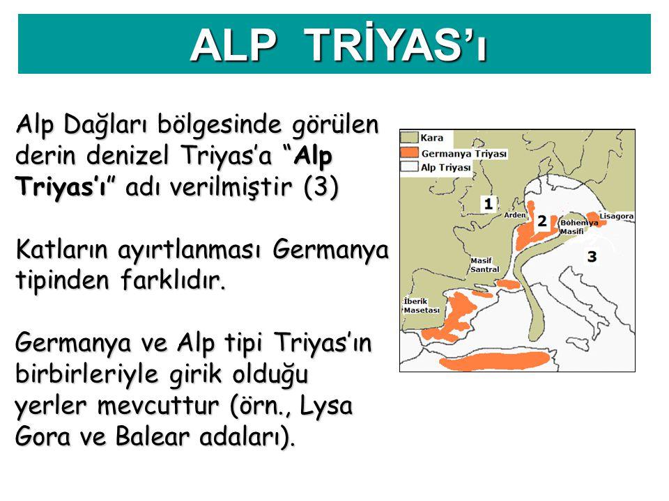 """Alp Dağları bölgesinde görülen derin denizel Triyas'a """"Alp Triyas'ı"""" adı verilmiştir (3) Katların ayırtlanması Germanya tipinden farklıdır. Germanya v"""