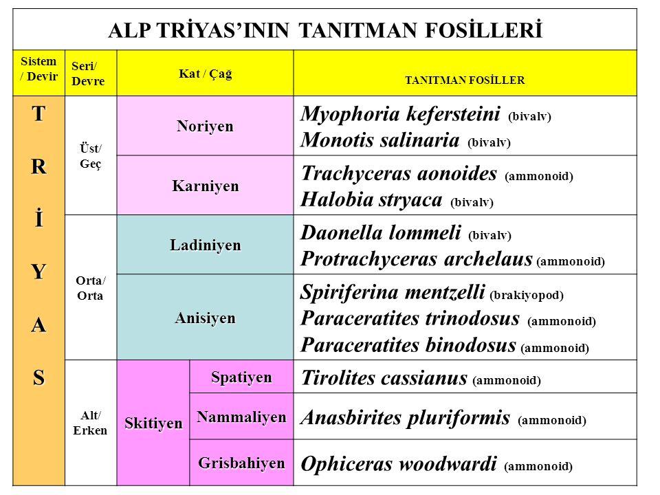 ALP TRİYAS'ININ TANITMAN FOSİLLERİ Sistem / Devir Seri/ Devre Kat / Çağ TANITMAN FOSİLLER TRİYASTRİYASTRİYASTRİYAS Üst/ Geç Noriyen Myophoria kefersteini (bivalv) Monotis salinaria (bivalv) Karniyen Trachyceras aonoides (ammonoid) Halobia stryaca (bivalv) Orta/ Orta Ladiniyen Daonella lommeli (bivalv) Protrachyceras archelaus (ammonoid) Anisiyen Spiriferina mentzelli (brakiyopod) Paraceratites trinodosus (ammonoid) Paraceratites binodosus (ammonoid) Alt/ ErkenSkitiyen Spatiyen Tirolites cassianus (ammonoid) Nammaliyen Anasbirites pluriformis (ammonoid) Grisbahiyen Ophiceras woodwardi (ammonoid)