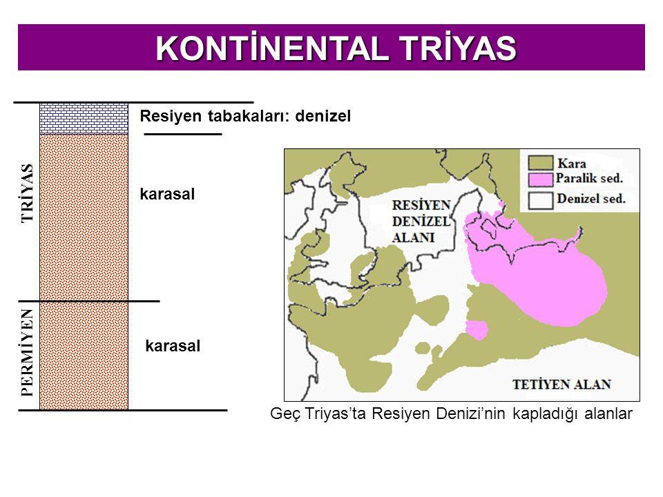 KONTİNENTAL TRİYAS KONTİNENTAL TRİYAS PERMİYEN TRİYAS Resiyen tabakaları: denizel karasal Geç Triyas'ta Resiyen Denizi'nin kapladığı alanlar
