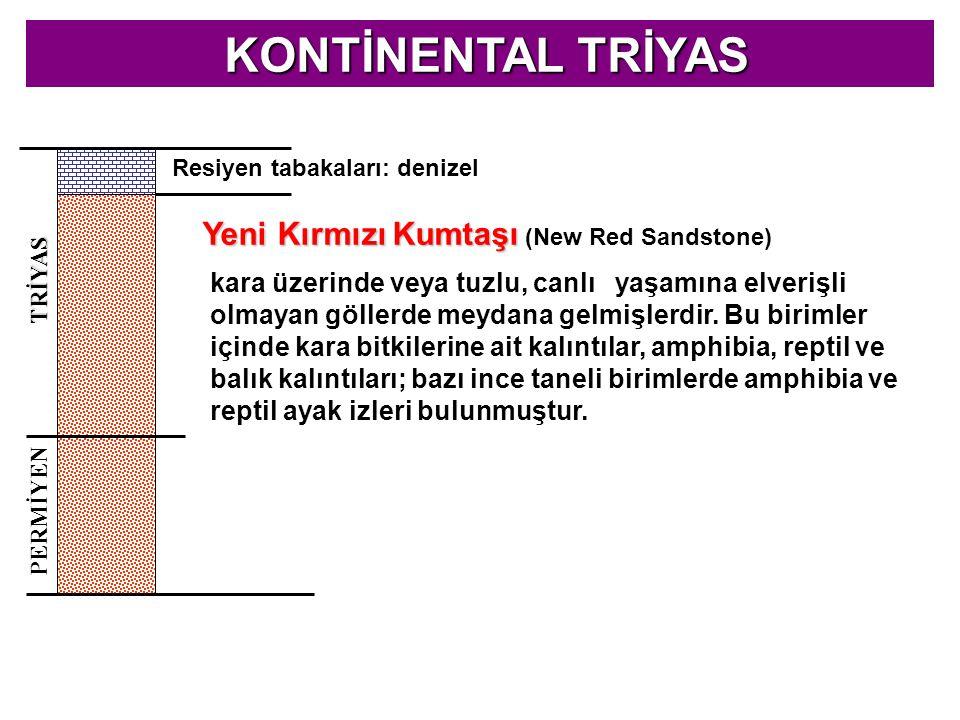 KONTİNENTAL TRİYAS KONTİNENTAL TRİYAS PERMİYEN TRİYAS Resiyen tabakaları: denizel Yeni Kırmızı Kumtaşı Yeni Kırmızı Kumtaşı (New Red Sandstone) kara ü