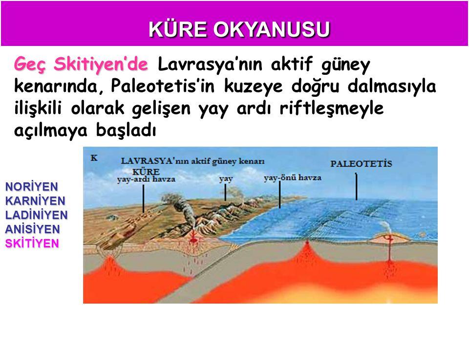 KÜRE OKYANUSU Geç Skitiyen'de Geç Skitiyen'de Lavrasya'nın aktif güney kenarında, Paleotetis'in kuzeye doğru dalmasıyla ilişkili olarak gelişen yay ardı riftleşmeyle açılmaya başladı NORİYENKARNİYENLADİNİYENANİSİYENSKİTİYEN