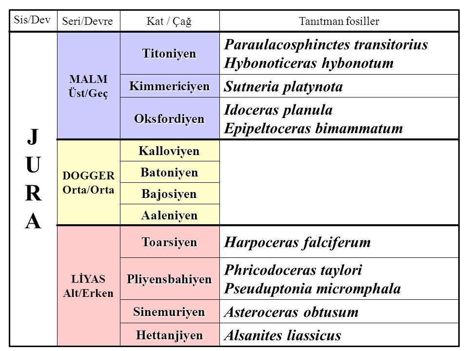 Alsanites liassicusHettanjiyen Asteroceras obtusumSinemuriyen Phricodoceras taylori Pseuduptonia micromphalaPliyensbahiyen Harpoceras falciferumToarsiyen LİYAS Alt/Erken Aaleniyen Bajosiyen Batoniyen Kalloviyen DOGGER Orta/Orta Idoceras planula Epipeltoceras bimammatumOksfordiyen Sutneria platynotaKimmericiyen Paraulacosphinctes transitorius Hybonoticeras hybonotumTitoniyen MALM Üst/Geç JURAJURA Tanıtman fosillerKat / ÇağSeri/Devre Sis/Dev