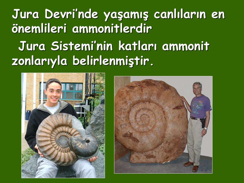 Jura Devri'nde yaşamış canlıların en önemlileri ammonitlerdir Jura Sistemi'nin katları ammonit zonlarıyla belirlenmiştir. Jura Sistemi'nin katları amm