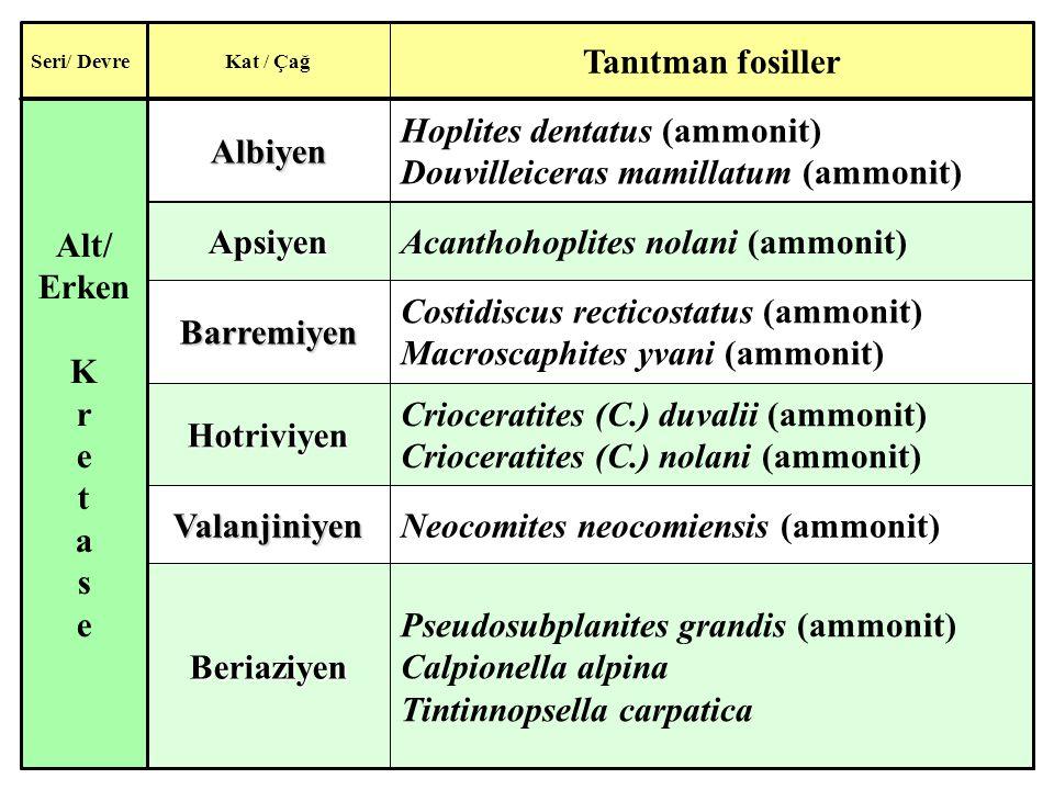 Pseudosubplanites grandis (ammonit) Calpionella alpina Tintinnopsella carpaticaBeriaziyen Neocomites neocomiensis (ammonit)Valanjiniyen Crioceratites (C.) duvalii (ammonit) Crioceratites (C.) nolani (ammonit)Hotriviyen Costidiscus recticostatus (ammonit) Macroscaphites yvani (ammonit)Barremiyen Acanthohoplites nolani (ammonit)Apsiyen Hoplites dentatus (ammonit) Douvilleiceras mamillatum (ammonit)Albiyen Alt/ Erken K r e t a s e Tanıtman fosiller Kat / ÇağSeri/ Devre