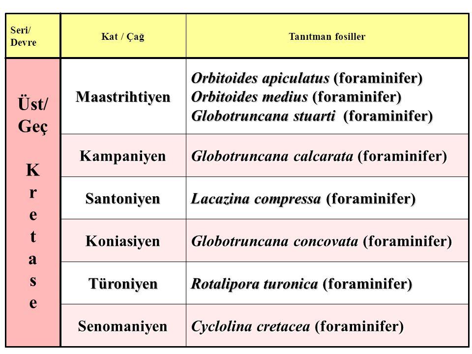 Cyclolina cretacea (foraminifer) Senomaniyen Rotalipora turonica (foraminifer) Türoniyen Globotruncana concovata (foraminifer) Koniasiyen Lacazina compressa (foraminifer) Santoniyen Globotruncana calcarata (foraminifer) Kampaniyen Orbitoides apiculatus (foraminifer) Orbitoides medius (foraminifer) Globotruncana stuarti (foraminifer) Maastrihtiyen Üst/ Geç K r e t a s e Tanıtman fosillerKat / Çağ Seri/ Devre
