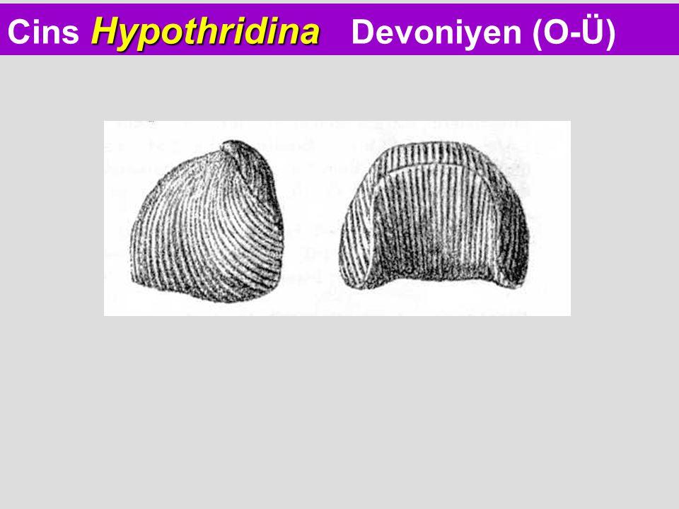 Hypothridina Cins Hypothridina Devoniyen (O-Ü)