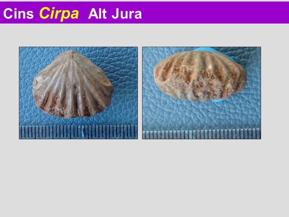 Cins Cirpa Alt Jura