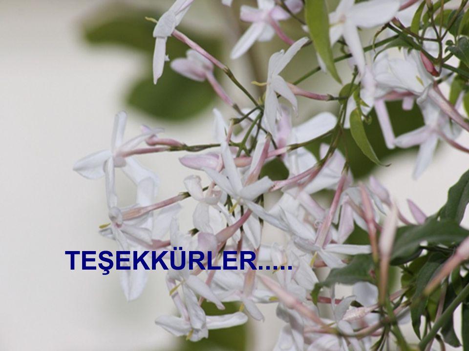 T.Döğeroğlu - 19 Ağustos 200841 TEŞEKKÜRLER.....