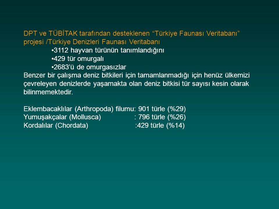 """DPT ve TÜBİTAK tarafından desteklenen """"Türkiye Faunası Veritabanı"""" projesi /Türkiye Denizleri Faunası Veritabanı 3112 hayvan türünün tanımlandığını 42"""