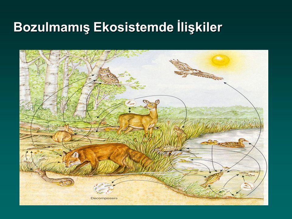 Orman BÇ/Türkiye'nin Orman Varlığı: Bugün Orman Alanı 20.7 mil.