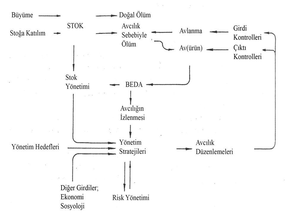 GruplarAkdeniz (toplam) Karad.(toplam) Türkiye (toplam) Karad.Boğazl ar- Marma ra Ege D.