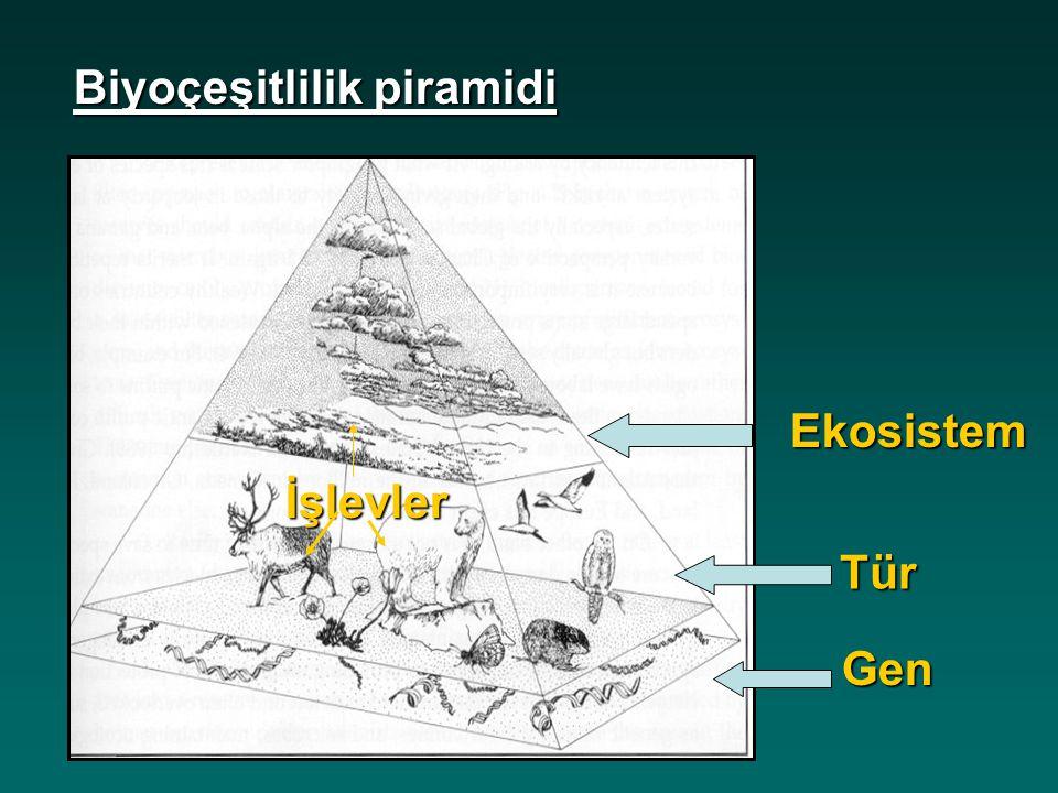Biyoçeşitlilik piramidi Gen Tür Ekosistem İşlevler