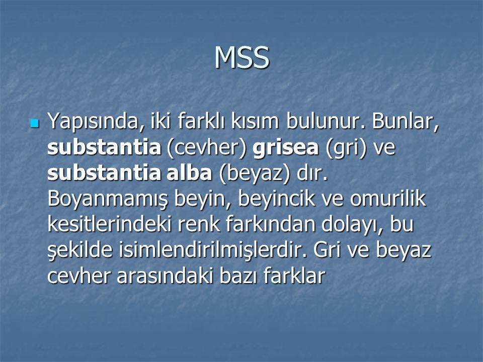MSS Yapısında, iki farklı kısım bulunur. Bunlar, substantia (cevher) grisea (gri) ve substantia alba (beyaz) dır. Boyanmamış beyin, beyincik ve omuril