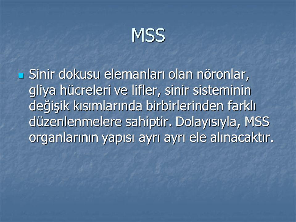 MSS Sinir dokusu elemanları olan nöronlar, gliya hücreleri ve lifler, sinir sisteminin değişik kısımlarında birbirlerinden farklı düzenlenmelere sahip