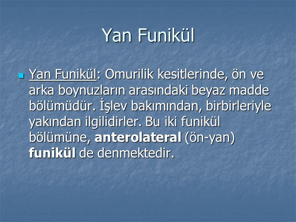 Yan Funikül Yan Funikül: Omurilik kesitlerinde, ön ve arka boynuzların arasındaki beyaz madde bölümüdür. İşlev bakımından, birbirleriyle yakından ilgi