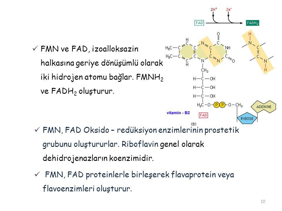 10 FMN ve FAD, izoalloksazin halkasına geriye dönüşümlü olarak iki hidrojen atomu bağlar. FMNH 2 ve FADH 2 oluşturur. FMN, FAD Oksido – redüksiyon enz
