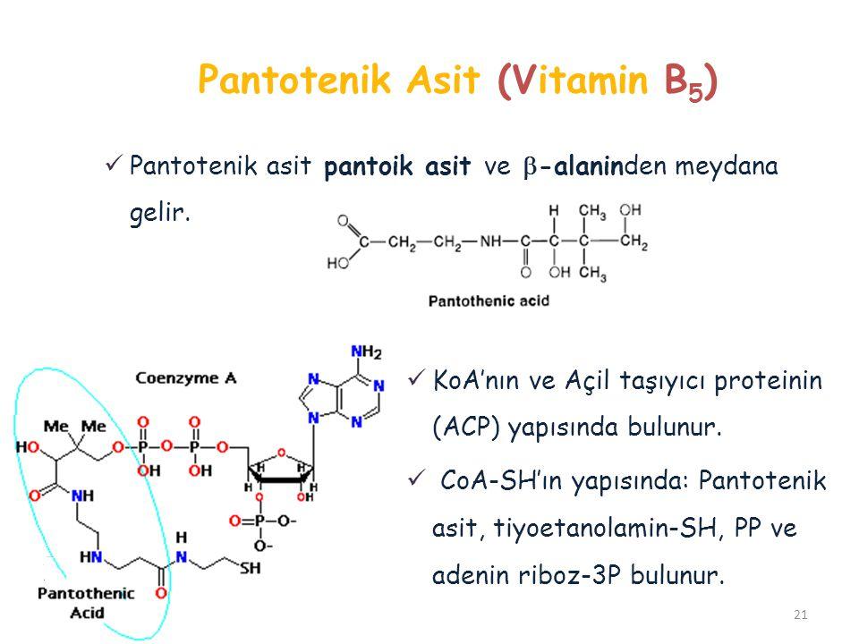 Pantotenik Asit (Vitamin B 5 ) KoA'nın ve Açil taşıyıcı proteinin (ACP) yapısında bulunur. CoA-SH'ın yapısında: Pantotenik asit, tiyoetanolamin-SH, PP