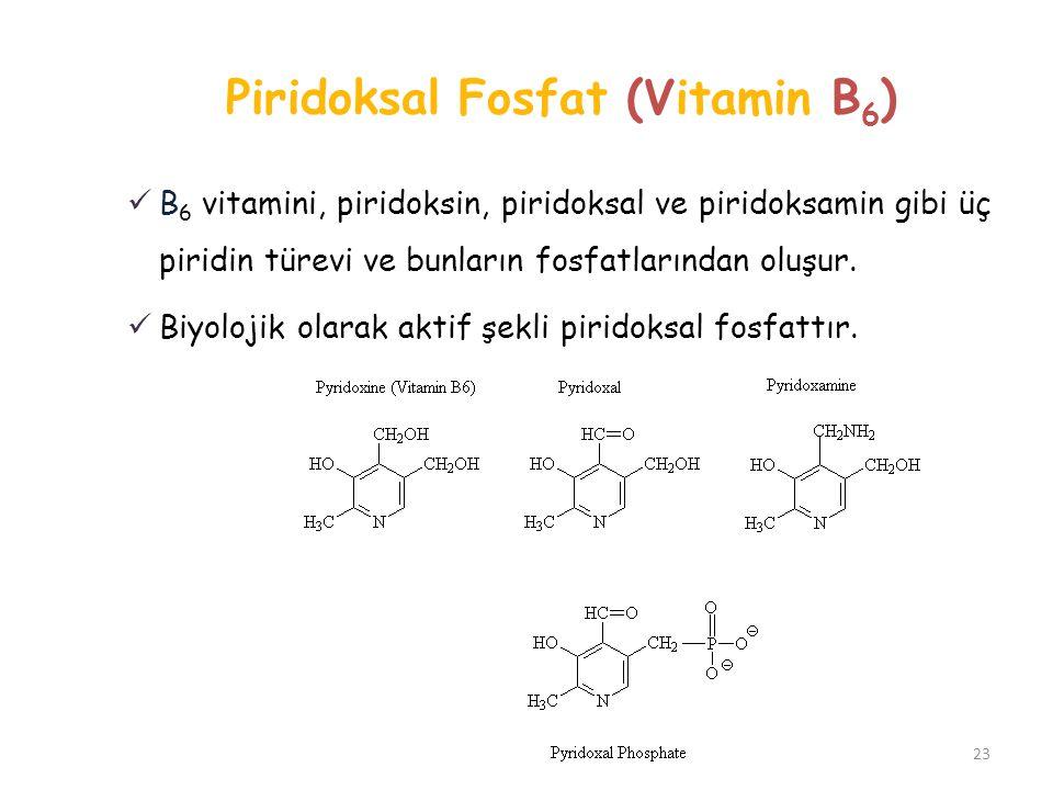 Piridoksal Fosfat (Vitamin B 6 ) 23 B 6 vitamini, piridoksin, piridoksal ve piridoksamin gibi üç piridin türevi ve bunların fosfatlarından oluşur. Biy