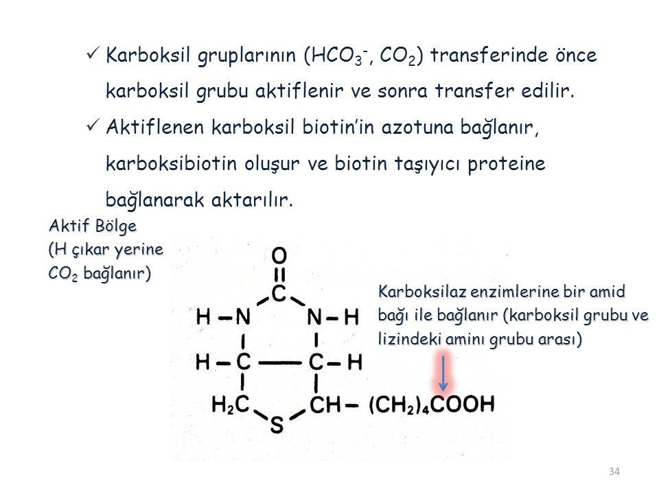 34 Karboksil gruplarının (HCO 3 -, CO 2 ) transferinde önce karboksil grubu aktiflenir ve sonra transfer edilir. Aktiflenen karboksil biotin'in azotun