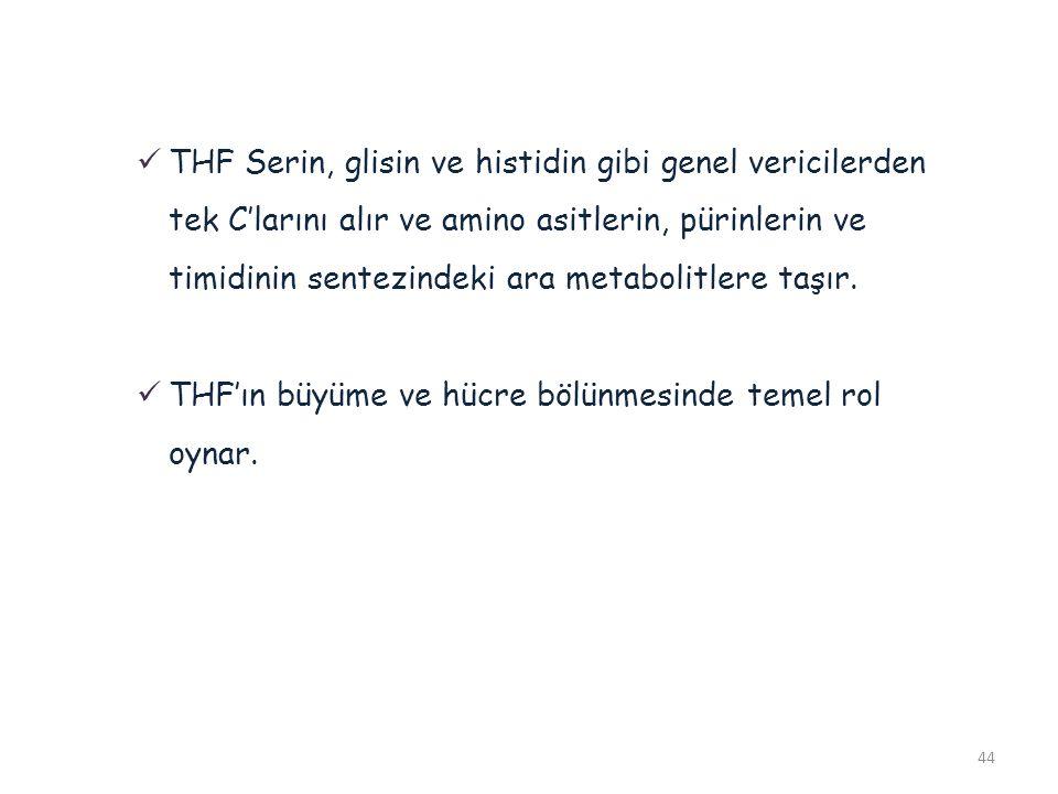 44 THF Serin, glisin ve histidin gibi genel vericilerden tek C'larını alır ve amino asitlerin, pürinlerin ve timidinin sentezindeki ara metabolitlere