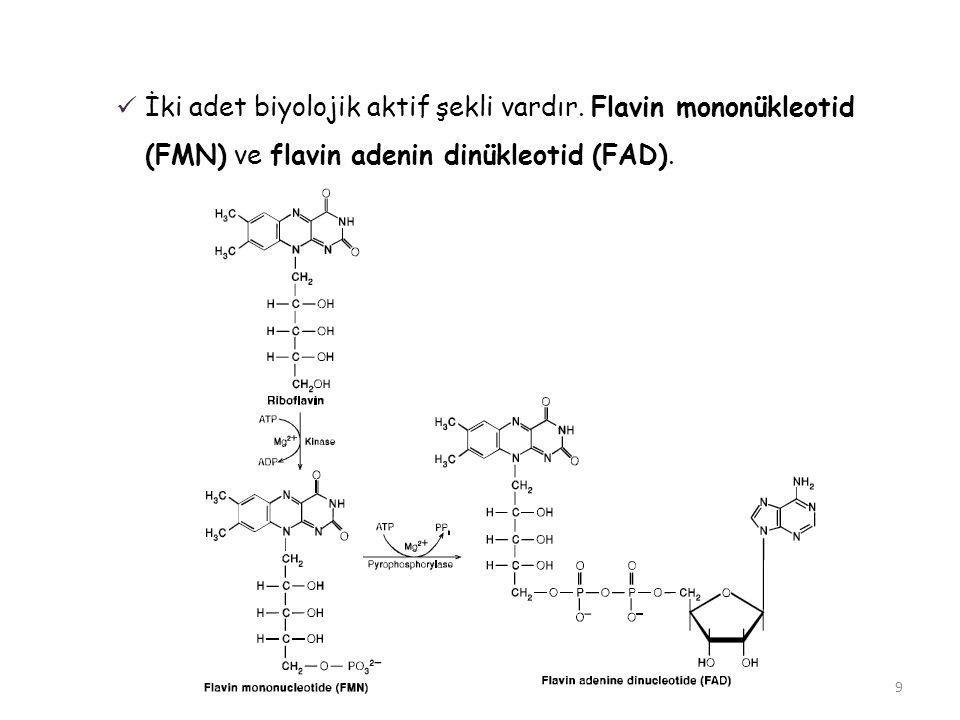 İki adet biyolojik aktif şekli vardır. Flavin mononükleotid (FMN) ve flavin adenin dinükleotid (FAD). 9